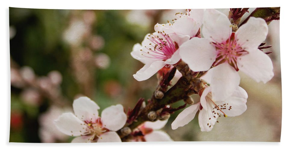 Peach Tree Beach Towel featuring the photograph Peach Tree Blossoms by Mel Hensley