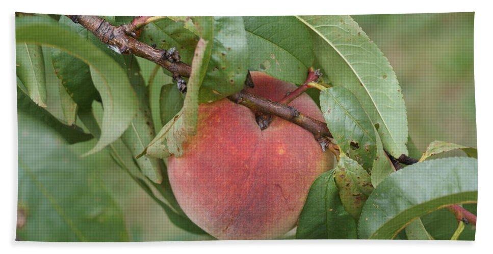 Peach Beach Towel featuring the photograph Peach For Harvest  # by Rob Luzier