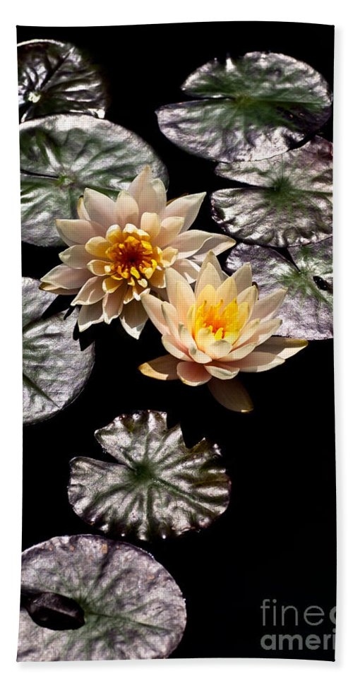Aquatic Plants Beach Towel featuring the photograph Peaches And Cream by Venetta Archer