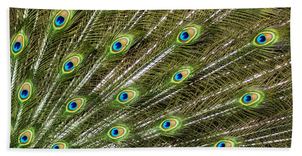 Peacock Beach Towel featuring the photograph Peacock Feather Abstract Pattern by Darleen Stry
