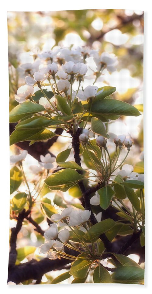 Pear Tree Beach Towel featuring the photograph Pear Blossoms by Angie Rea