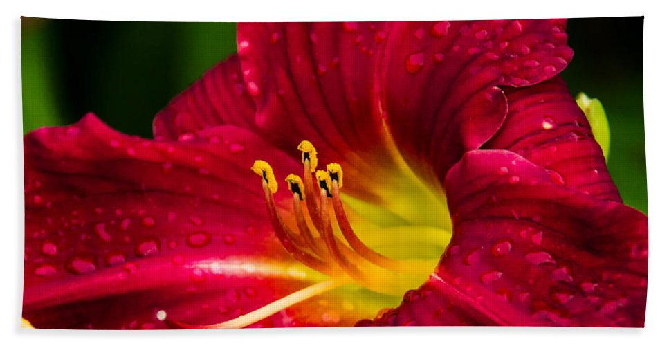 Red Beach Towel featuring the photograph Peek A Boo by Shari Brase-Smith