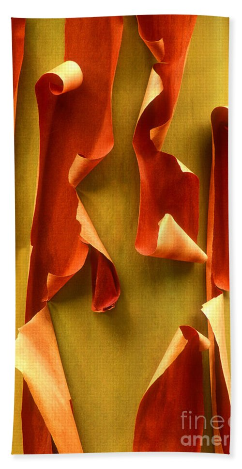 Pacific Madrone Beach Towel featuring the photograph Peeling Bark Pacific Madrone Tree Washington by Dave Welling
