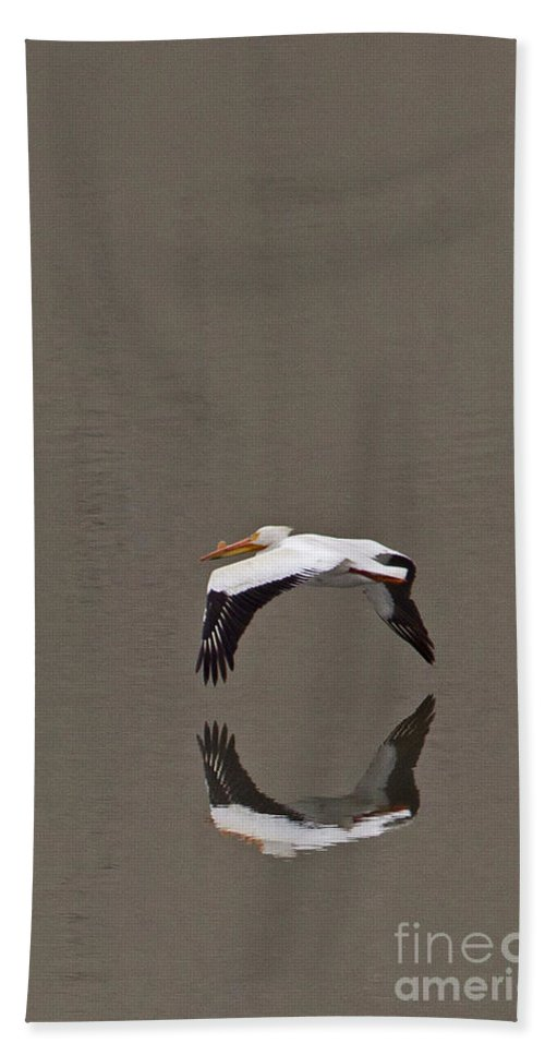 Elecanus Erythrorhynchos Beach Towel featuring the photograph Pelican  #4373 by J L Woody Wooden