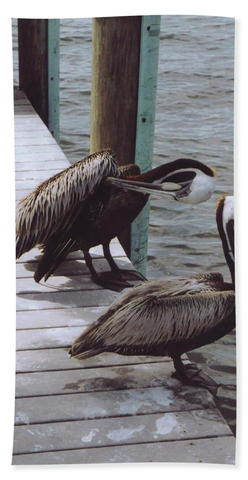 Matlacha Beach Towel featuring the photograph Pelicans by Robert Floyd