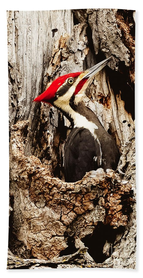 Beach Towel featuring the photograph Perfect Pileated Pose by Cheryl Baxter