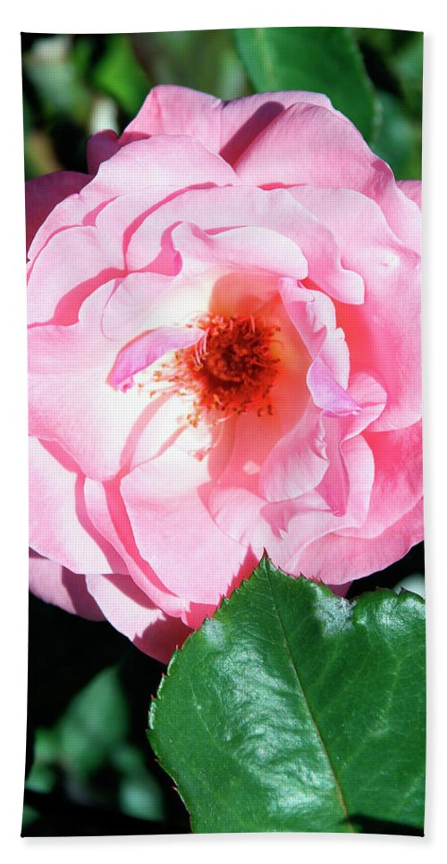 Rose Beach Towel featuring the photograph Perfectly Pink Palm Springs by William Dey