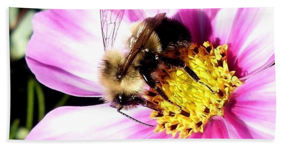 Bumblebee Beach Towel featuring the photograph Persistence Into October by Will Borden