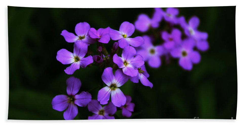 Phlox Beach Towel featuring the photograph Phlox Blossoms by William Norton