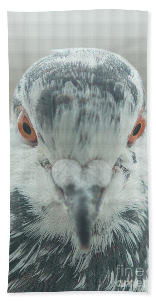 Birds Beach Towel featuring the photograph Pigeon Portrait En Face by Jivko Nakev