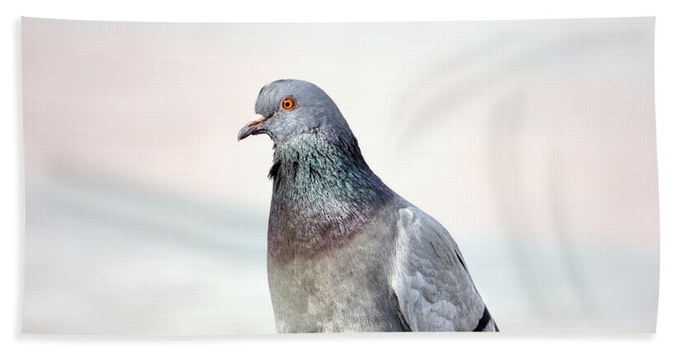 Pigeon Beach Towel featuring the photograph Pigeon Portrait by Pati Photography