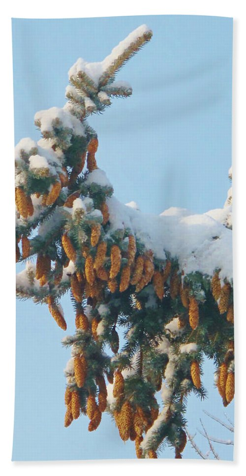 Pine Beach Towel featuring the photograph Pine Cones by Ian MacDonald