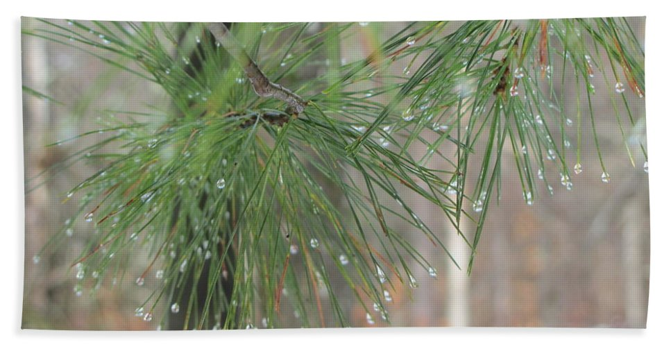 Pine Beach Towel featuring the photograph Pine by Sally Rice
