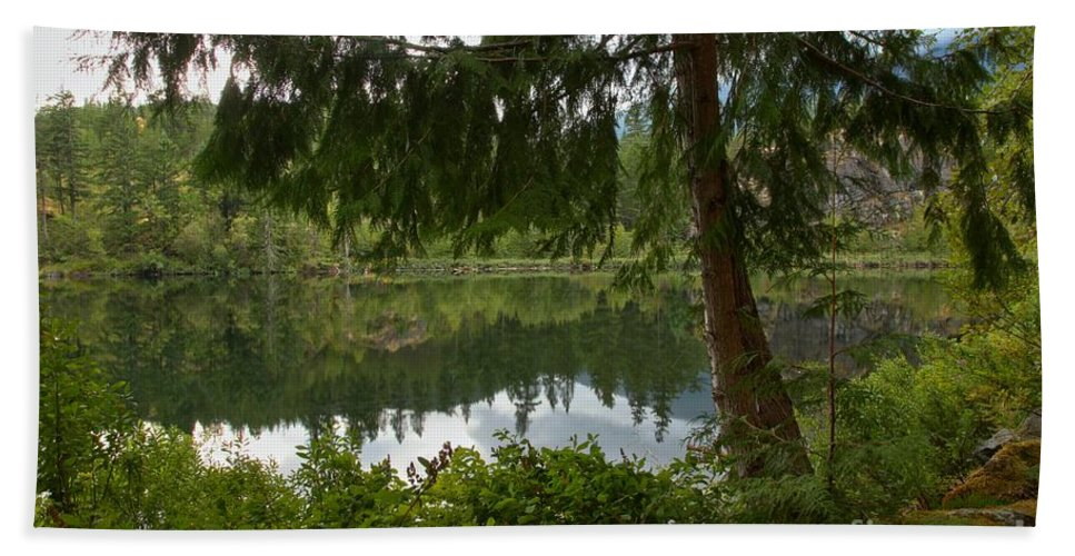 Starvation Lake Beach Towel featuring the photograph Pine Trees Over Starvation Lake by Adam Jewell
