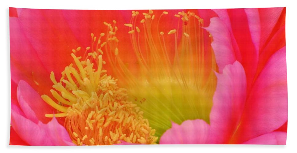 Cactus Flower Beach Towel featuring the photograph Pink And Yellow Cactus Flower by Michelle Cassella