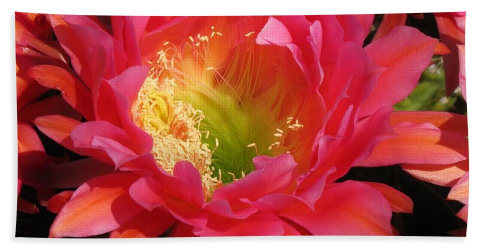 Cactus Flower Beach Towel featuring the photograph Pink Cactus Flower by Michelle Cassella