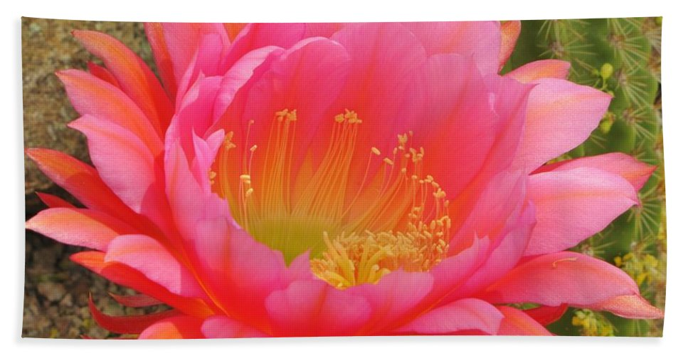 Cactus Flower Beach Towel featuring the photograph Pink Cactus Flower Of The Southwest by Michelle Cassella