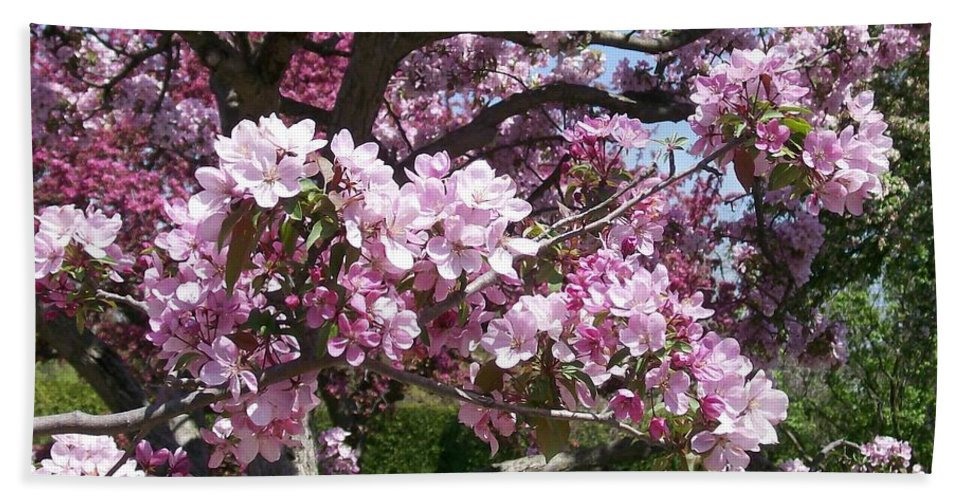 Invitation Beach Towel featuring the photograph Pink Crabapple by Laurie Eve Loftin