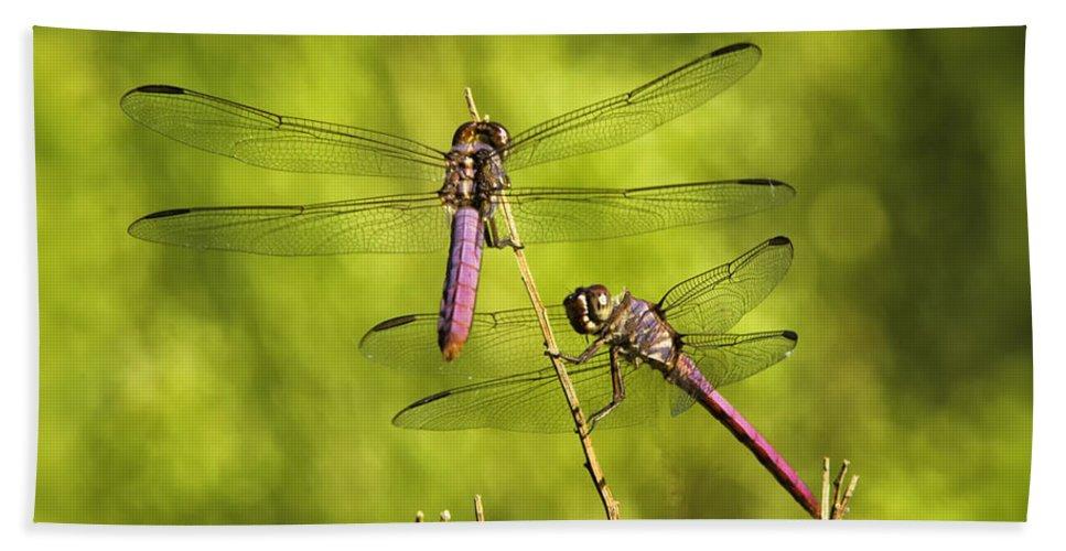 Pink Dragonfly Beach Towel featuring the photograph Pink Dragonflies by Saija Lehtonen