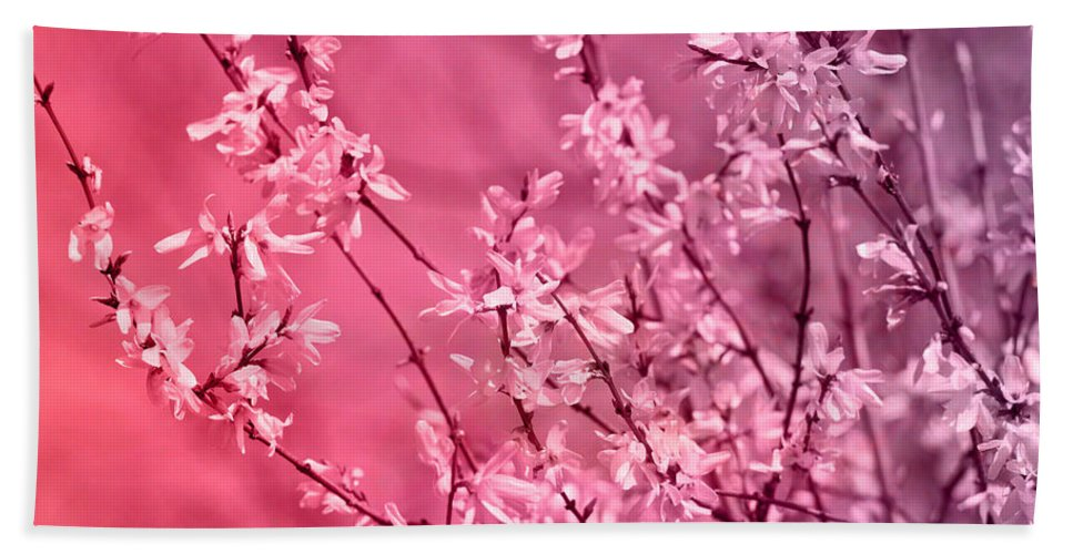 Pink Forsythia Beach Towel For Sale By Pati Photography