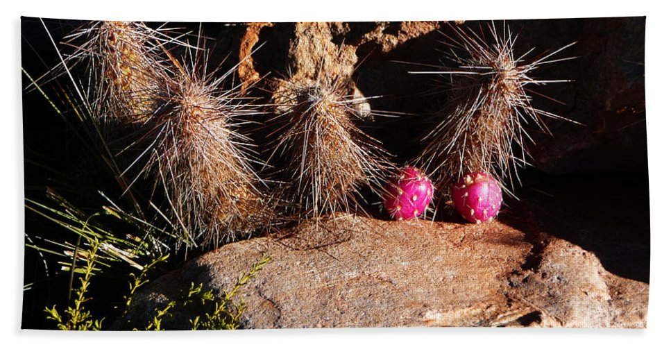 Prickly Beach Towel featuring the photograph Pink Lady Cactus by Xueling Zou