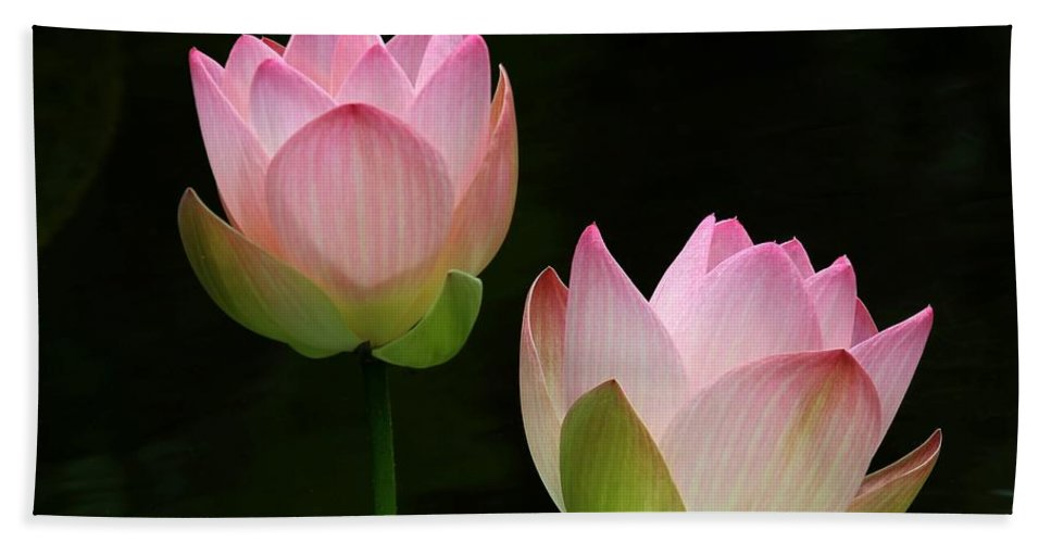 Pink Beach Towel featuring the photograph Pink Lotus Duet by Sabrina L Ryan