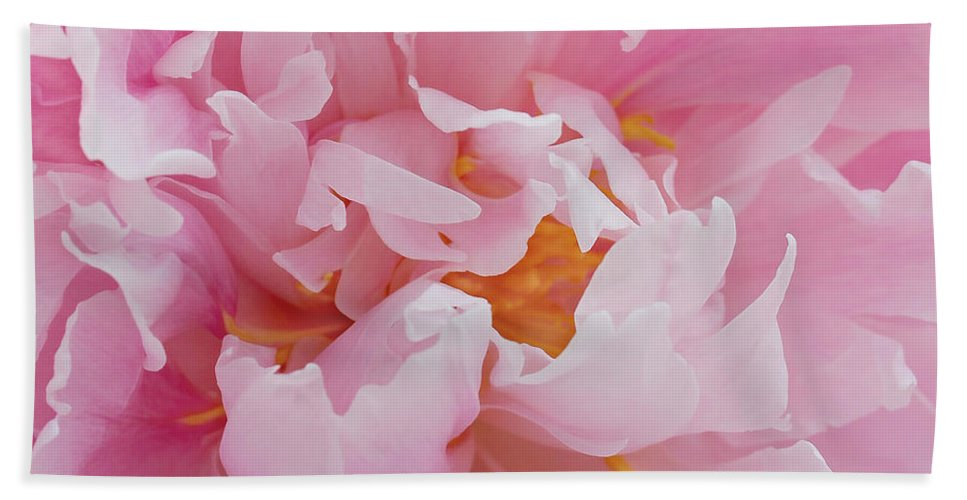 Peony Beach Towel featuring the photograph Pink Peony Flower Waving Petals by Jennie Marie Schell