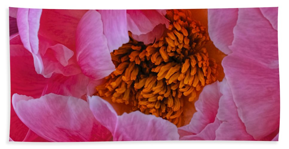 Pink Beach Towel featuring the photograph Pink Petals by Dennis Reagan