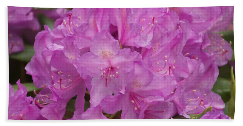 Rhododendron Beach Towel featuring the photograph Pink Rhododendron by William Norton