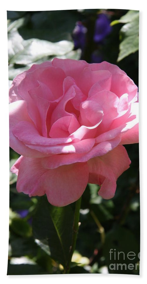 Rose Beach Towel featuring the photograph Pink Rose by Christiane Schulze Art And Photography