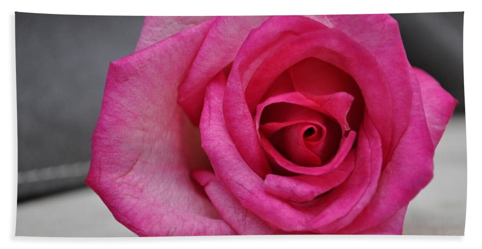 Rose Prints Beach Towel featuring the photograph Pink Rose by Kristina Deane