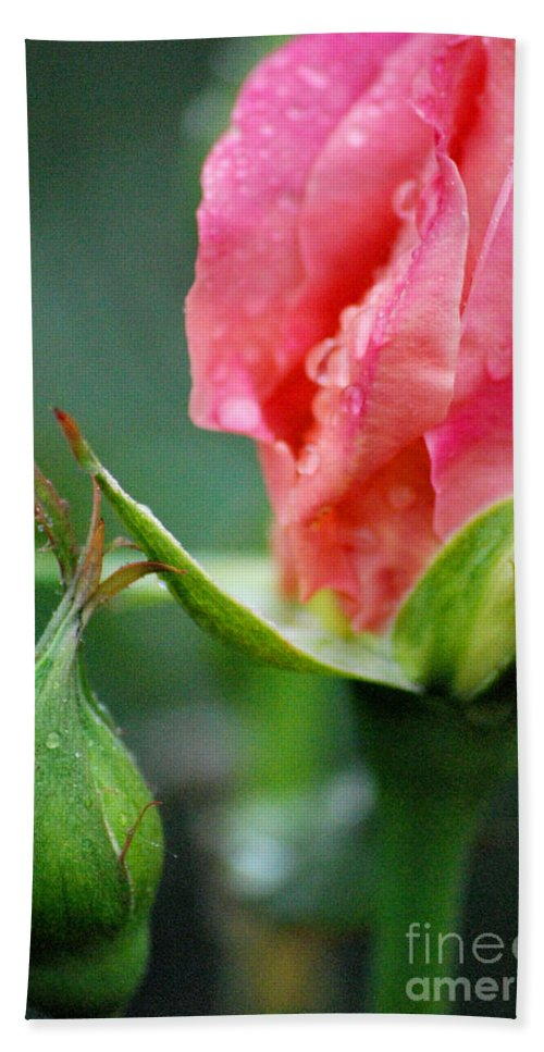Rose Beach Towel featuring the photograph Pink Rose by Nancy Mueller