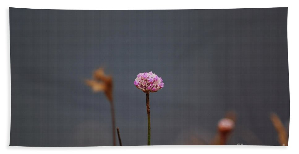 Floral Beach Towel featuring the photograph Pink Series IIi by Sharon Elliott
