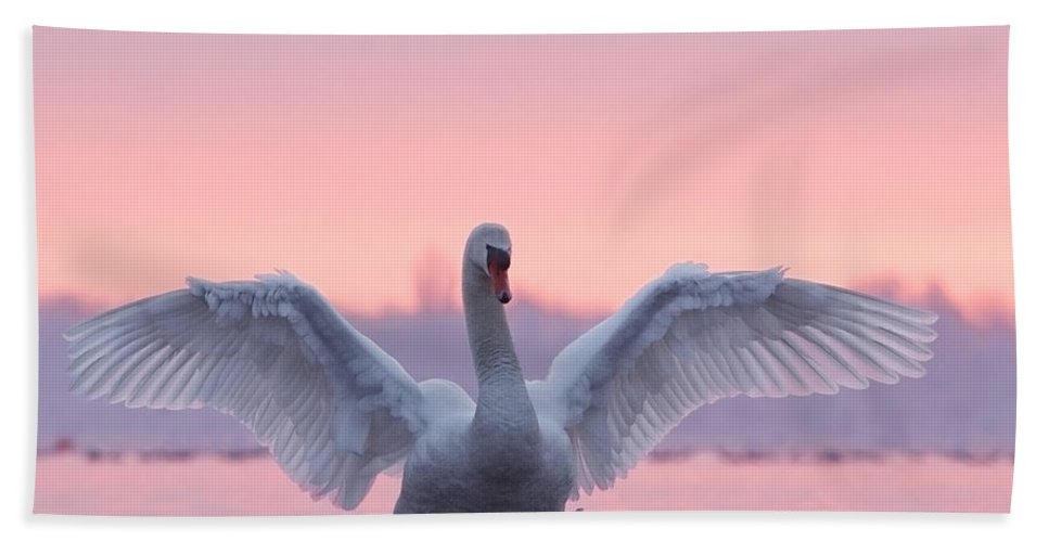 Mute Swan Beach Towel featuring the photograph Pink Swan by Roeselien Raimond