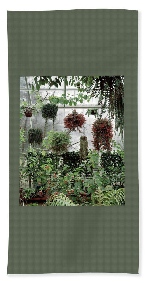 Plants Hanging In A Greenhouse Beach Towel