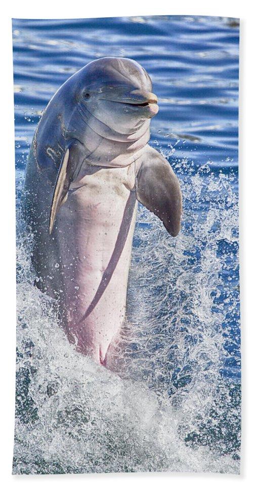 Dolphin Beach Towel featuring the photograph Playful V8 by Douglas Barnard