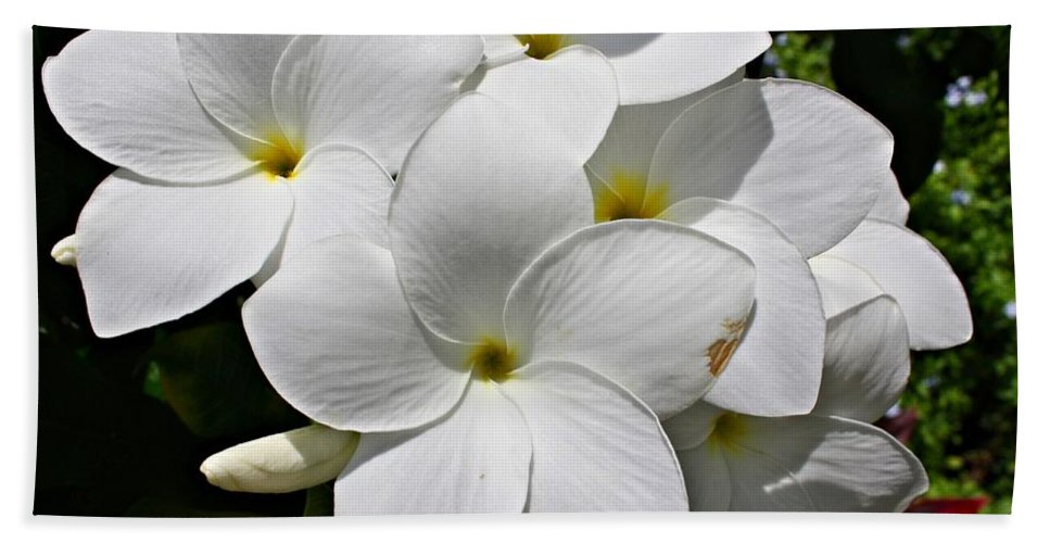 Flowers Beach Towel featuring the photograph Plumeria Flowers by Marcelo Albuquerque