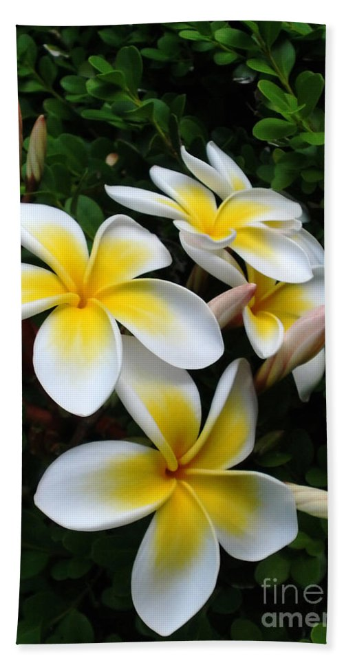 Photography Beach Towel featuring the photograph Plumeria In The Sunshine by Kaye Menner