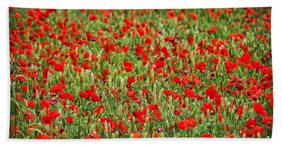 Poppy Beach Towel featuring the photograph Poppies In Wheat by Elena Elisseeva
