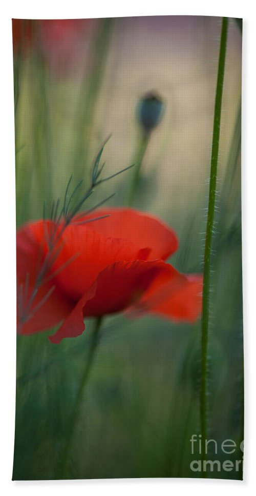 Flower Beach Towel featuring the photograph Poppy Abstract by Mike Reid