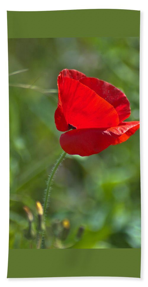 Bloom Beach Towel featuring the photograph Poppy Blowing In The Wind by Jill Mitchell