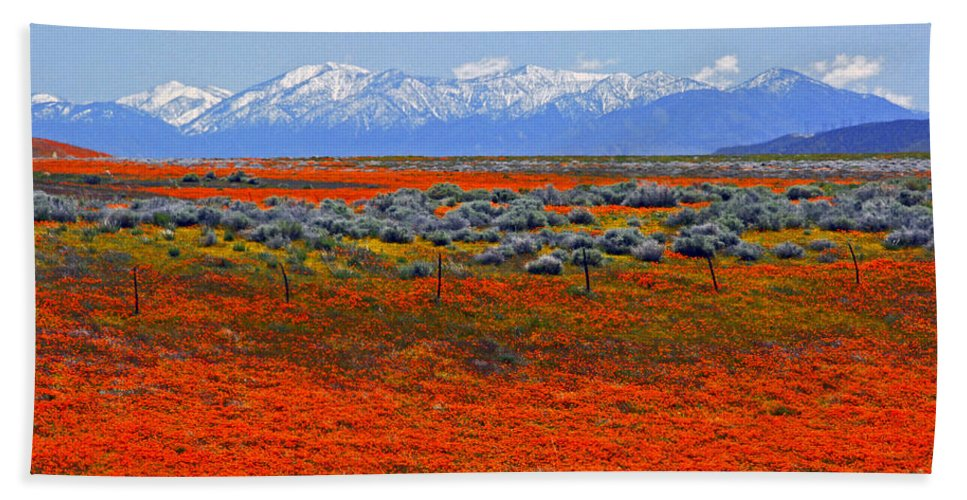 Poppies Beach Towel featuring the photograph Poppy Fields Forever by Lynn Bauer