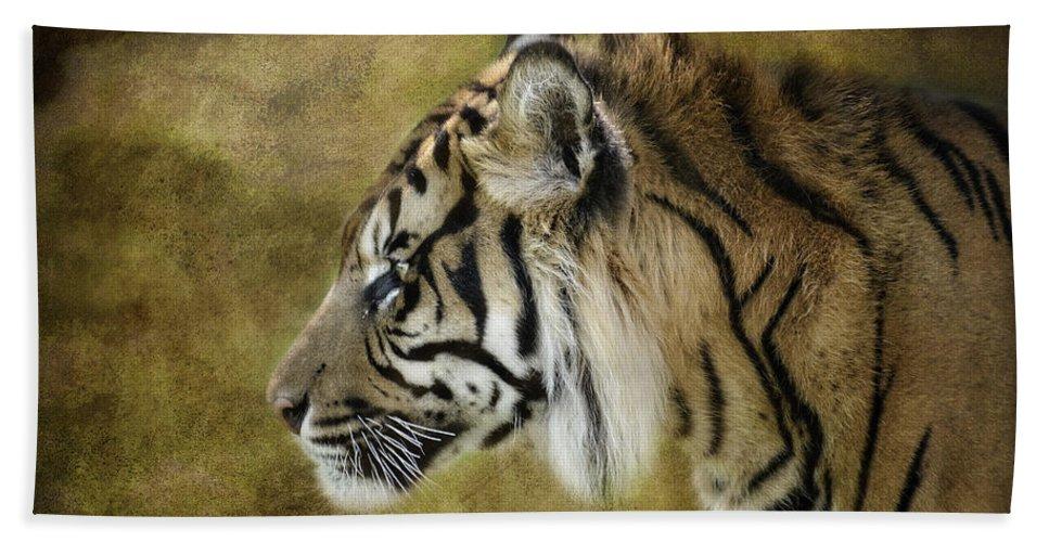 Sumatran Tiger Beach Towel featuring the photograph Portrait Of A Tiger by Saija Lehtonen