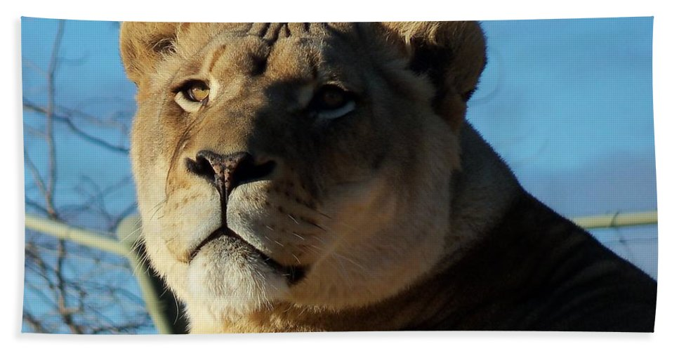 Wild Beach Towel featuring the photograph Portrait Of The Mighty Queen by Lingfai Leung