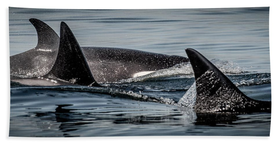 Orca Beach Towel featuring the photograph Power Pod II by Roxy Hurtubise