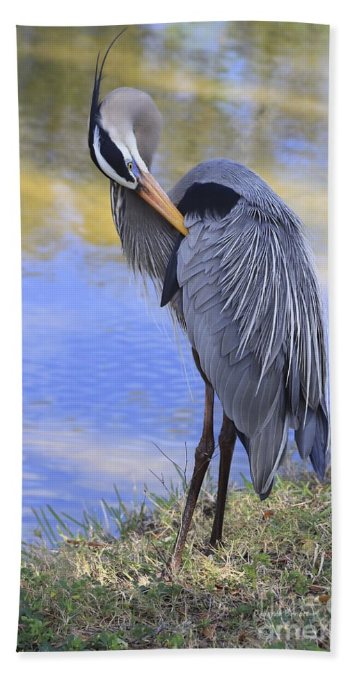 Blue Heron Beach Towel featuring the photograph Preening By The Pond by Deborah Benoit