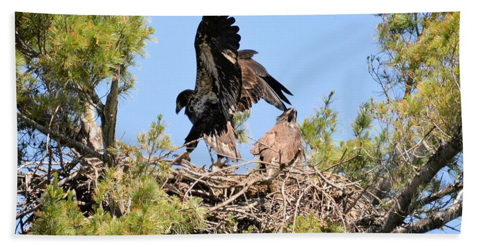 Eagles Beach Towel featuring the photograph Preparing For Flight 2 by Bonfire Photography