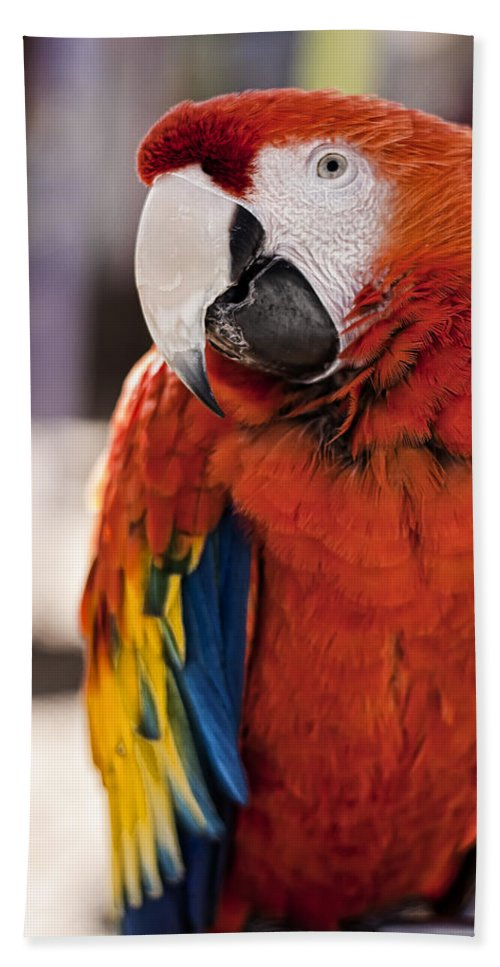 Macaw Beach Towel featuring the photograph Pretty Bird 2 by Scott Wood