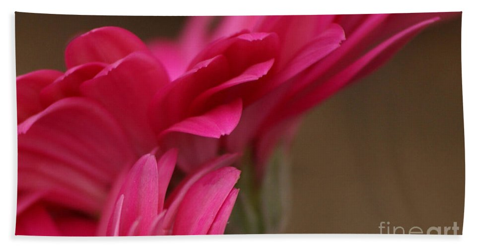 Pink Beach Towel featuring the photograph Pretty Petals by Carol Lynch