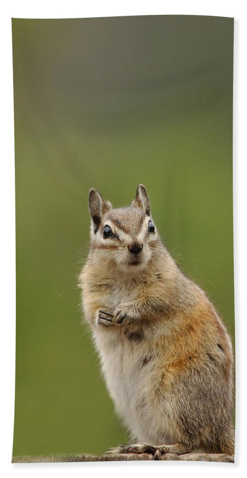Squirrel Beach Towel featuring the photograph Pretty Please by Donna Blackhall